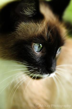 Katė drovuolė nusimeta gėdą