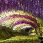 Dvasios ramybės pradžiamokslis sodas
