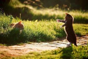džiaukimės vienas kitu