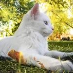 katytė