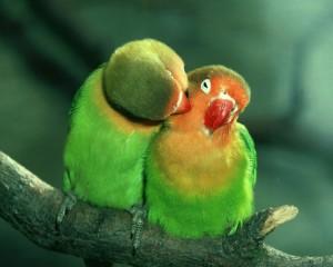 laiminga mylinti porele