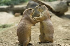 Rūpintis draugu