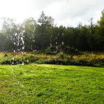 mylėti saulę lietų 15