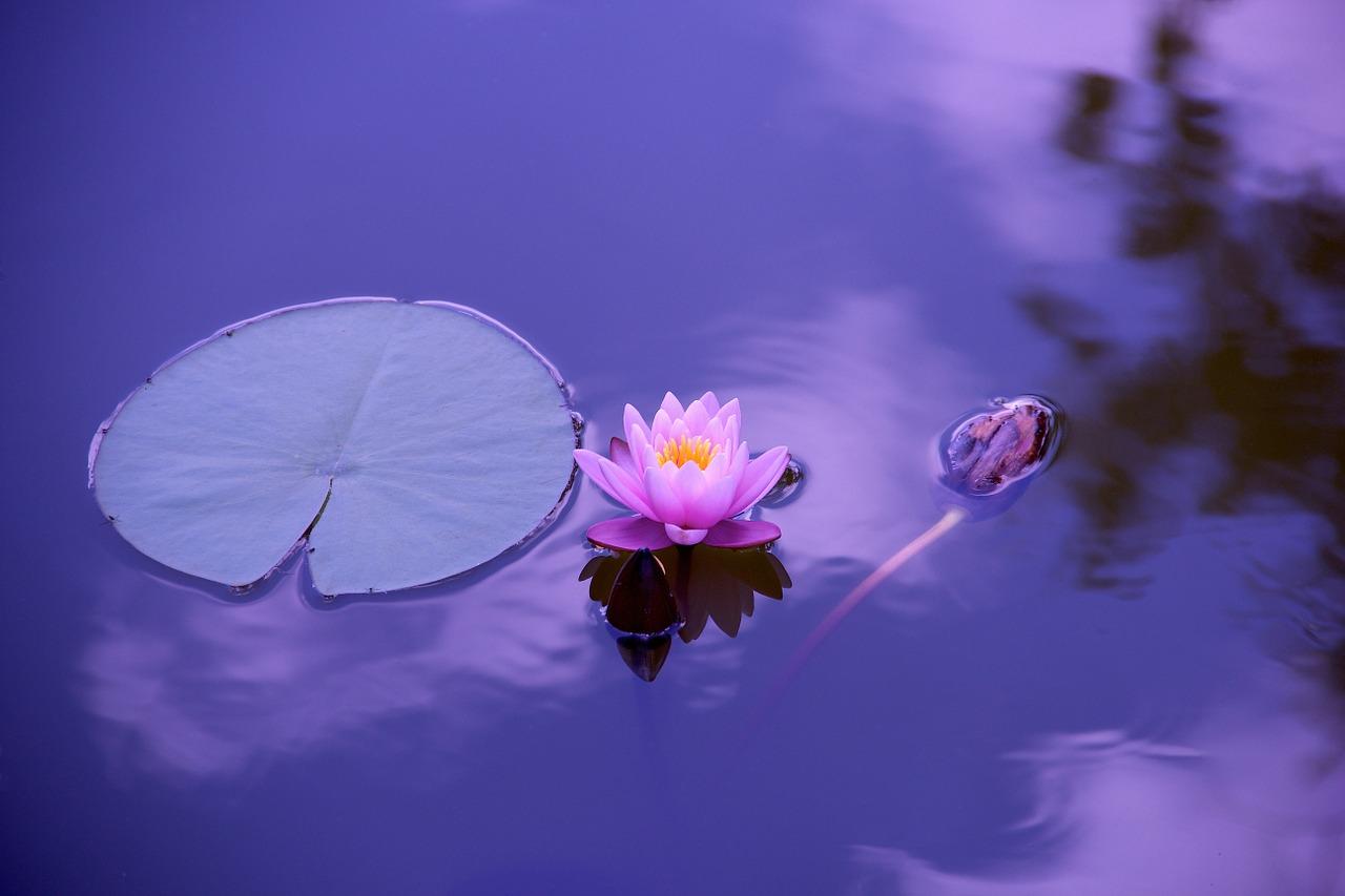 medituoti-kasdien