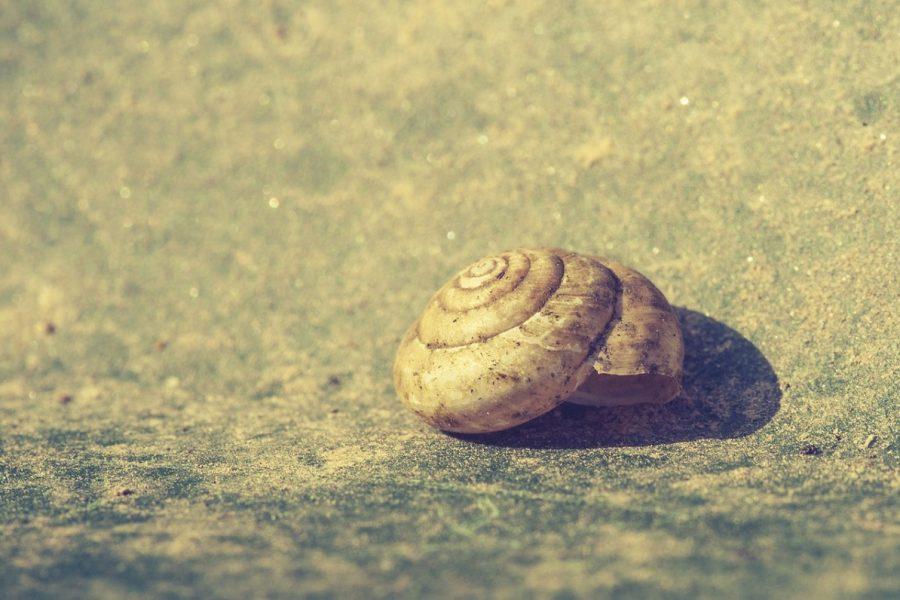 Mano ilga kelionė į Lūšyną, arba Kaip aš įveikiau vienas didžiausių savo gyvenimo baimių